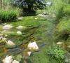 Algues vertes sur le Mourrefrey