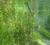 Spermaphytes sur le bas Verdon